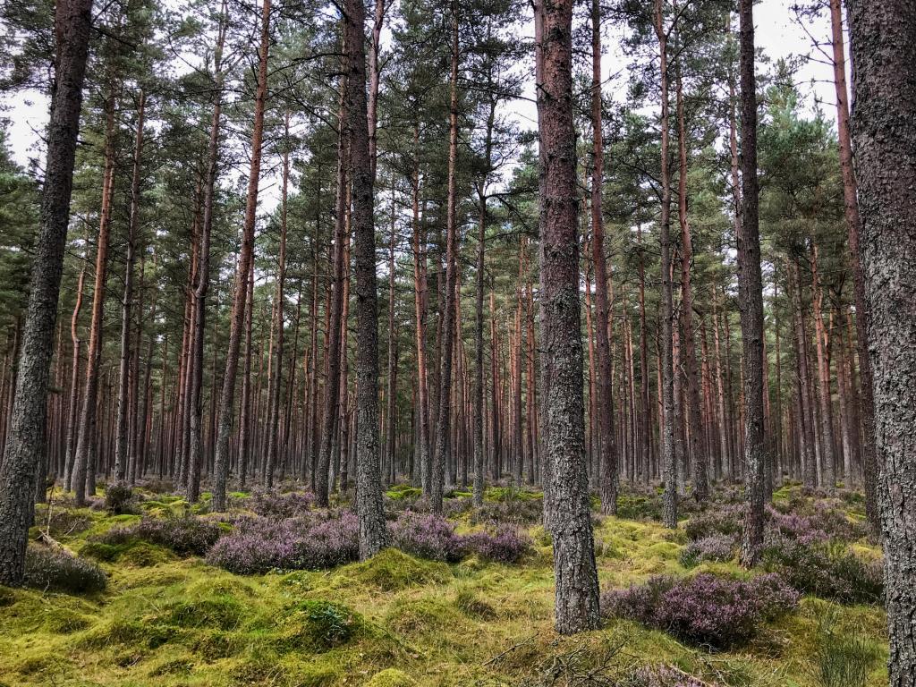 Urlaub in Schottland im Wald